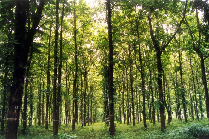 type-5a-tropical-dry-deciduous-forests