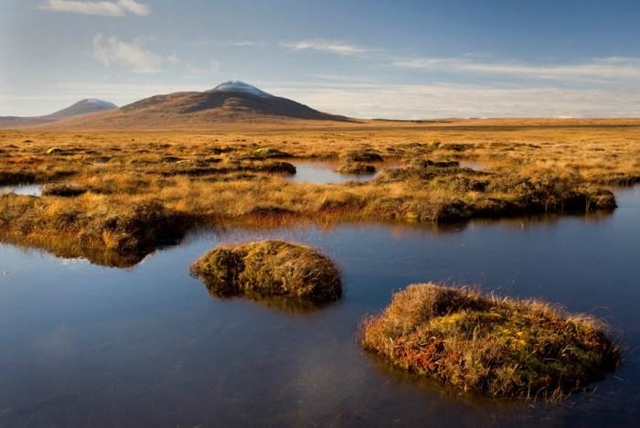 forsinard-flows-peat-bog-2--1050667---free-comp