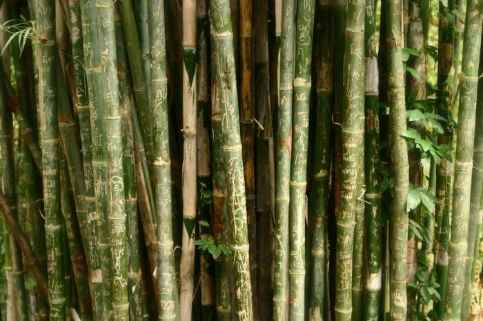 bamboo-with-engravings