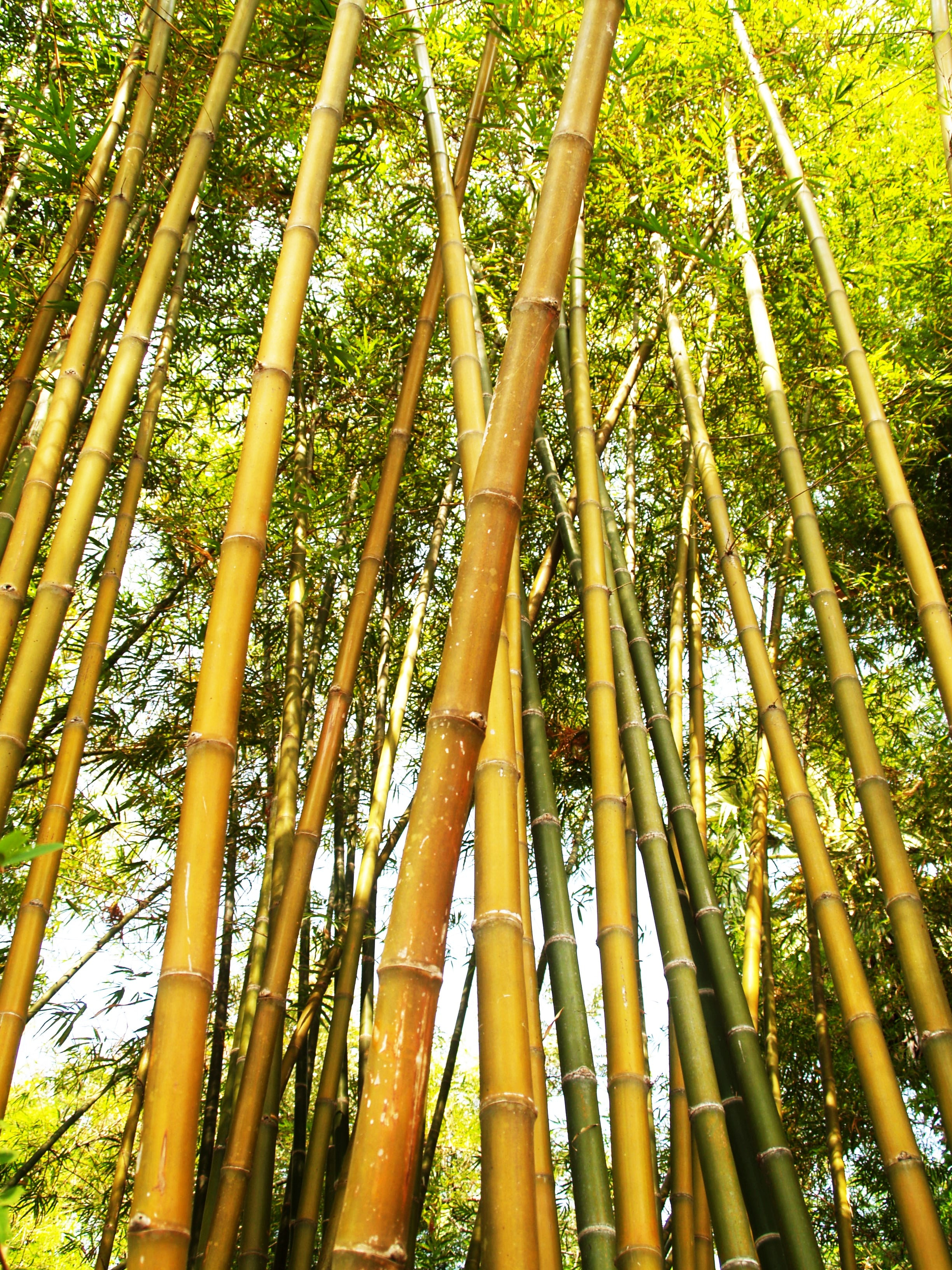 bamboo-tree-during-daytime-216611